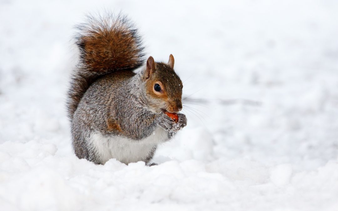 8 Common Pest Control Questions For the Winter Months